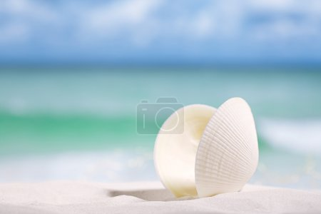 white sea shell  on  beach