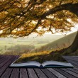 Book concept Beautiful golden Autumn tree lit by s...