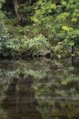 Krajina dlouhé expozice řeky protékající svěží zelené přední
