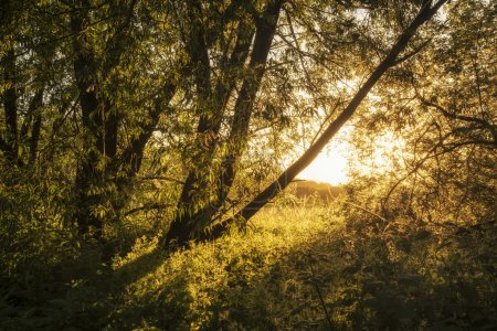 Photo for Beautiful sunrise landscape of sunlight glowing on footpath in trees - Royalty Free Image