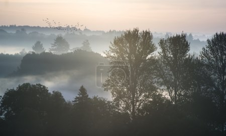Forest landscape with layers of mist at sunrise in countryside