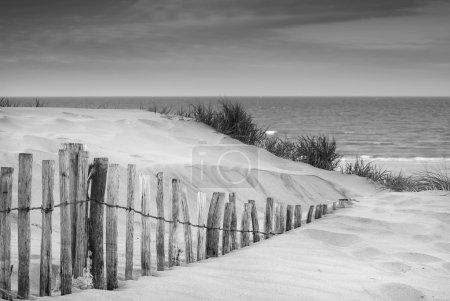 Grassy sand dunes landscape at sunrise in black and white