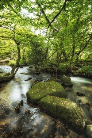 Photo pour Iamge paysage du fleuve traversant la forêt verte luxuriante en été - image libre de droit