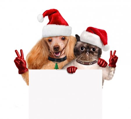Dog and cat with peace fingers in red Christmas hats