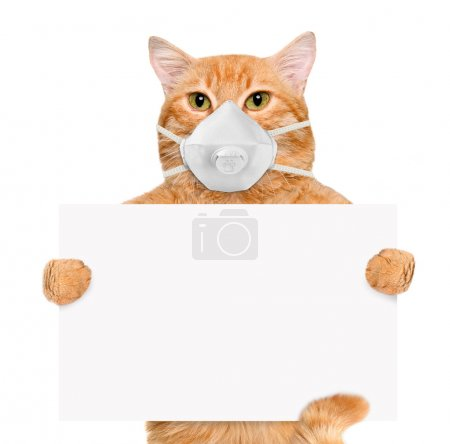 Cat wearing a face protective mask. Isolated on wh...