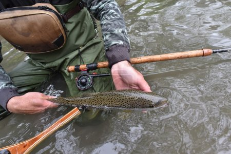 Fly-fisherman holding fario trout