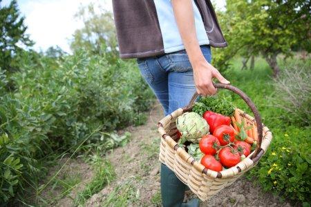 woman holding basket full of vegetables