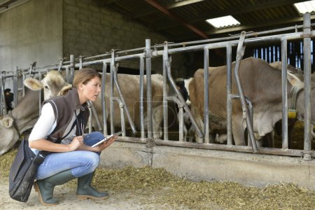 Photo for Veterinarian checking on herd's health in barn - Royalty Free Image