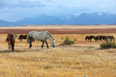 Pferde Weiden in Ackerland