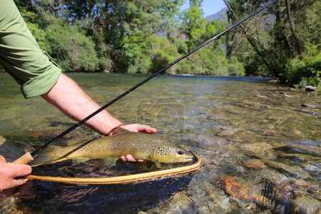 Photo for Close up of brown trout fish caught in landing net - Royalty Free Image