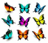 Collection of colorful butterflies flying in different directio
