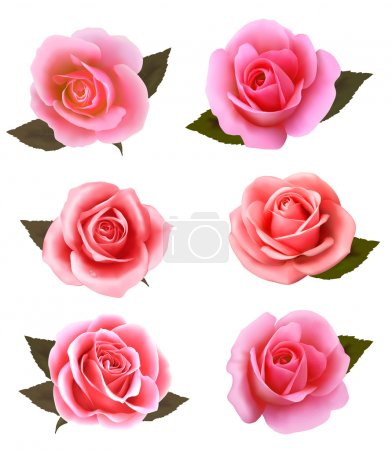 Illustration for Set of beautiful pink roses. Vector. - Royalty Free Image