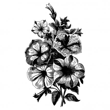 Vintage etching vector illustration of a bouquet o...