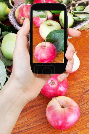 tourist photographs of fresh summer apples