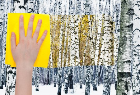 hand deletes birches in forest by
