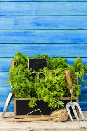 Herbs and garden tools
