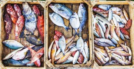 Fresh fish at a market in a Mediterranean port