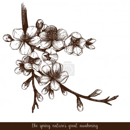 Illustration for Vector vintage design for your card or invitation with hand drawn blooming fruit tree twig. Spring flowers illustration. - Royalty Free Image