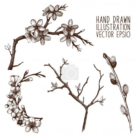 Illustration pour Collection vintage de brindilles d'arbres à fleurs dessinées à la main et isolées sur blanc. Ensemble de croquis de brindilles de printemps - image libre de droit