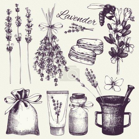 Illustration for Vector set of ink hand drawn lavender illustration. Vintage collection of lavender flowers sketch - Royalty Free Image