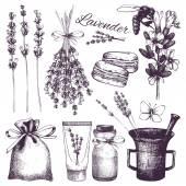 Vector set of ink hand drawn lavender illustration Vintage collection of lavender flowers sketch