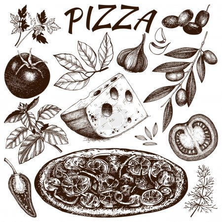 Illustration for Vector collection of ink hand drawn pizza illustration isolated on white. Vintage Pizza sketch set - Royalty Free Image