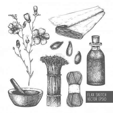 Illustration for Vector set of ink hand drawn flax illustration isolated on white. Vintage flax sketch - Royalty Free Image