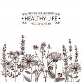 Vintage design with herbal flowers illustration