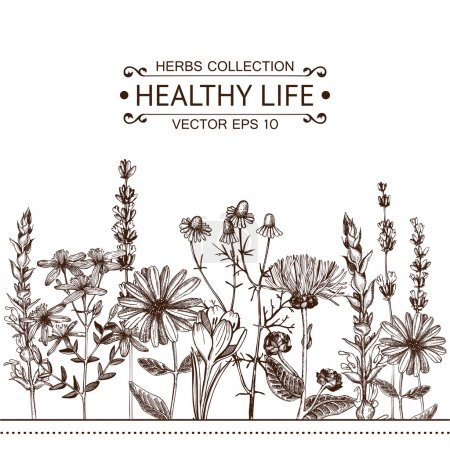 Illustration for Vector card with ink hand drawn medical herbs and plants. Vintage design with herbal flowers illustration - Royalty Free Image