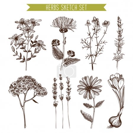 Illustration for Vector set of ink hand drawn medical herbs and plants sketch. Vintage collection of herbal flowers illustration - Royalty Free Image