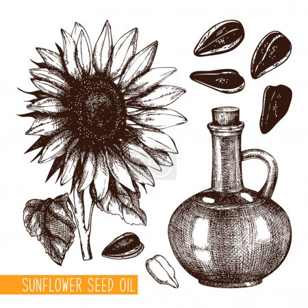 Illustration for Vector set with ink hand drawn sunflower seed oil illustration isolated on white - Royalty Free Image