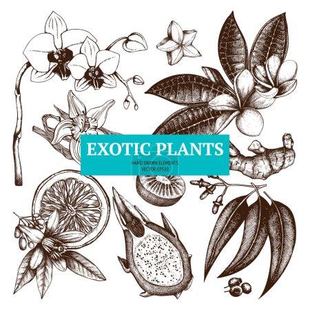 Illustration pour Collection vectorielle de fruits tropicaux dessinés à la main à l'encre, fleurs et feuilles croquis. Ensemble de croquis de plantes exotiques vintage - image libre de droit