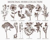 Medicinal herbs collection