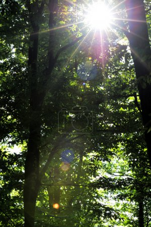 Photo for Sunlight breaking through trees in forest (lens flare) in summer spring. - Royalty Free Image