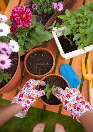 Barefoot woman potting flowers