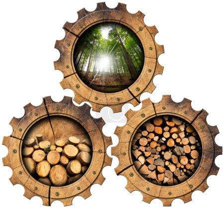 Tartaki - drewniane koła zębate