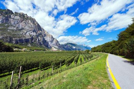 Photo pour Piste cyclable dans la vallée de Sarca (Valle del Sarca) à travers les vergers de pommiers. Trentino Alto Adige, Italie, Europe - image libre de droit