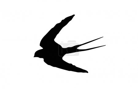 Silhouet Birds Swallows are family from the order ...