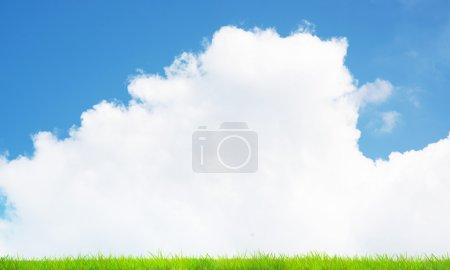 Photo pour Image de fond du champ vert sous le ciel bleu - image libre de droit