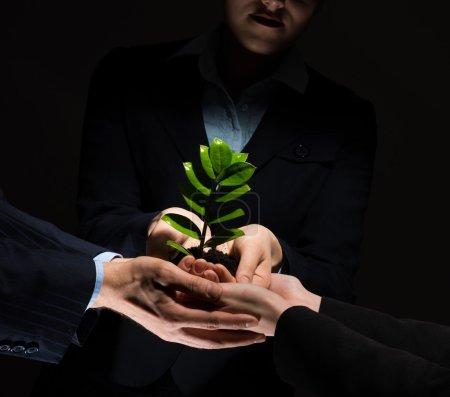 Photo pour Unité des gens d'affaires protégeant petit germe avec les mains - Germe dans les mains - image libre de droit