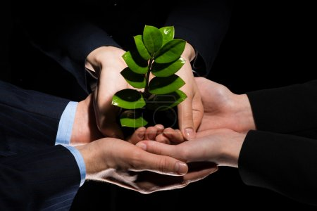 Photo for Unity of businesspeople protecting small sprout with hands - Royalty Free Image