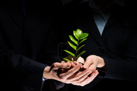 Unity of businesspeople - Sprout in hands