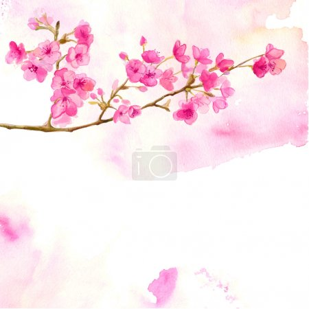 Illustration for Pink background with branch of cherry blossom. Vector watercolor illustration of sakura. - Royalty Free Image