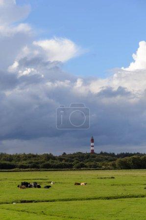 Photo pour Île d'Amrum, Allemagne : Phare dans un paysage verdoyant avec des animaux au premier plan par une journée nuageuse - image libre de droit