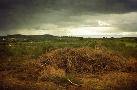 Photo for Beautiful countryside landscape with dry branches on the ground - Royalty Free Image
