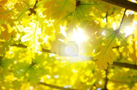 Leaves Backlight