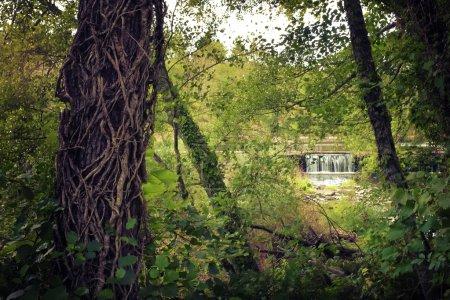 Photo pour Cascade et forêt avec tronc d'arbre avec tiges de lierre - image libre de droit