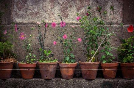 Photo pour Façades de maisons rurales décorées avec de vieux vases de fleurs - image libre de droit