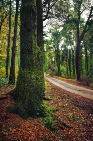 Photo for Wet road in green forest with trees and leaves. fall landscape - Royalty Free Image