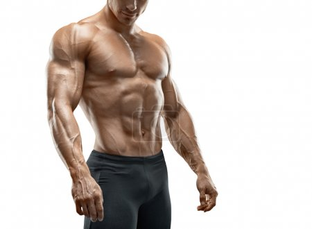 Fit young bodybuilder isolated on white background